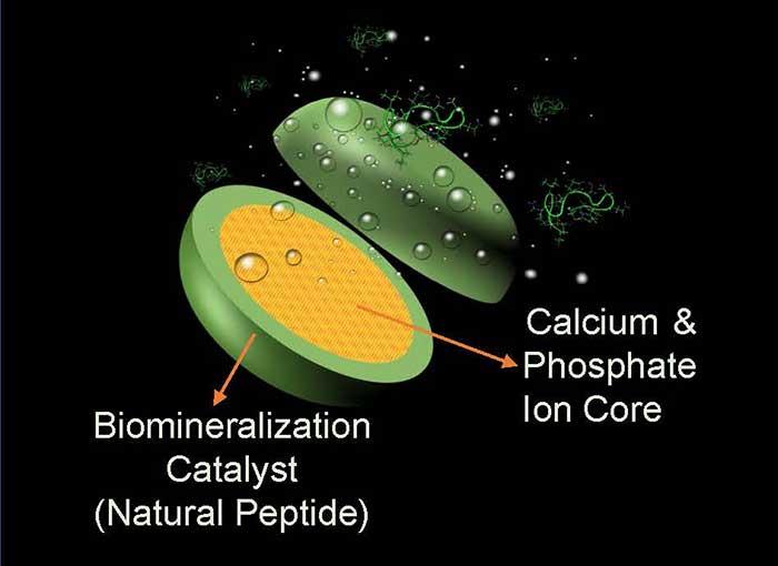 Graphic of calcium building lozenge